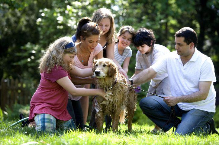conseils_chiens_hygiene_.jpg