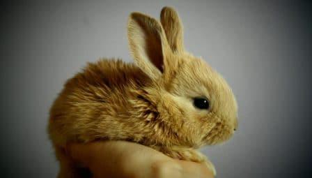 conseils_lapins_sites_veterinaires_10.jpg