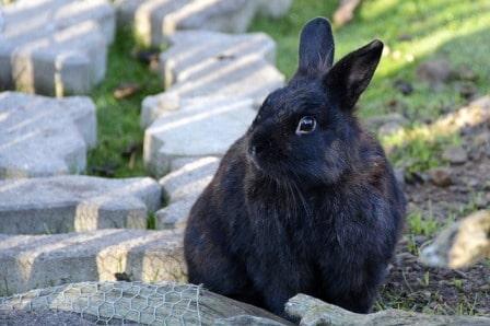 conseils_lapins_sites_veterinaires_13.jpg