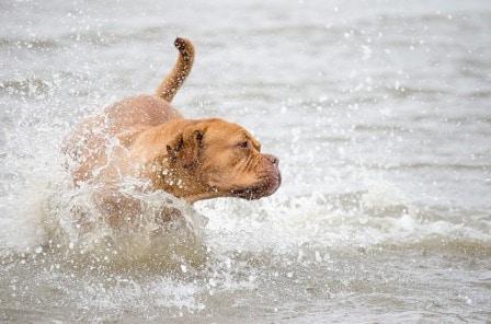 Conseils_chiens_divers_eau-plage_07.jpg