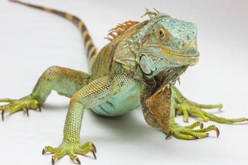Conseils_NAC_reptiles_04.jpg