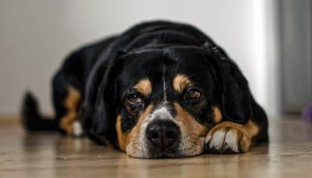 conseils_chiens-34.jpg