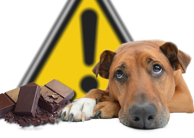 Chocolat-danger.jpg