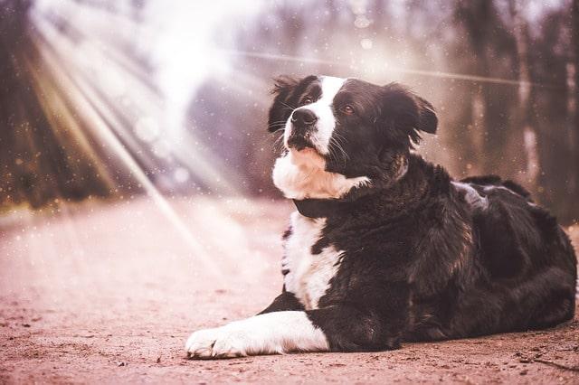 Actualites-veterinaires-coup-de-chaleur-5.jpg